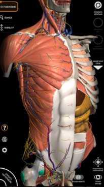 Анатомия - 3D Атлас (полная версия / Мод разблокировано)